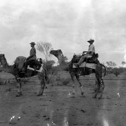 Explorer L. A. Wells travelling by camel