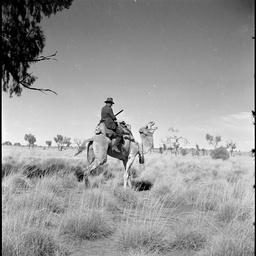 Charles Mountford on a camel