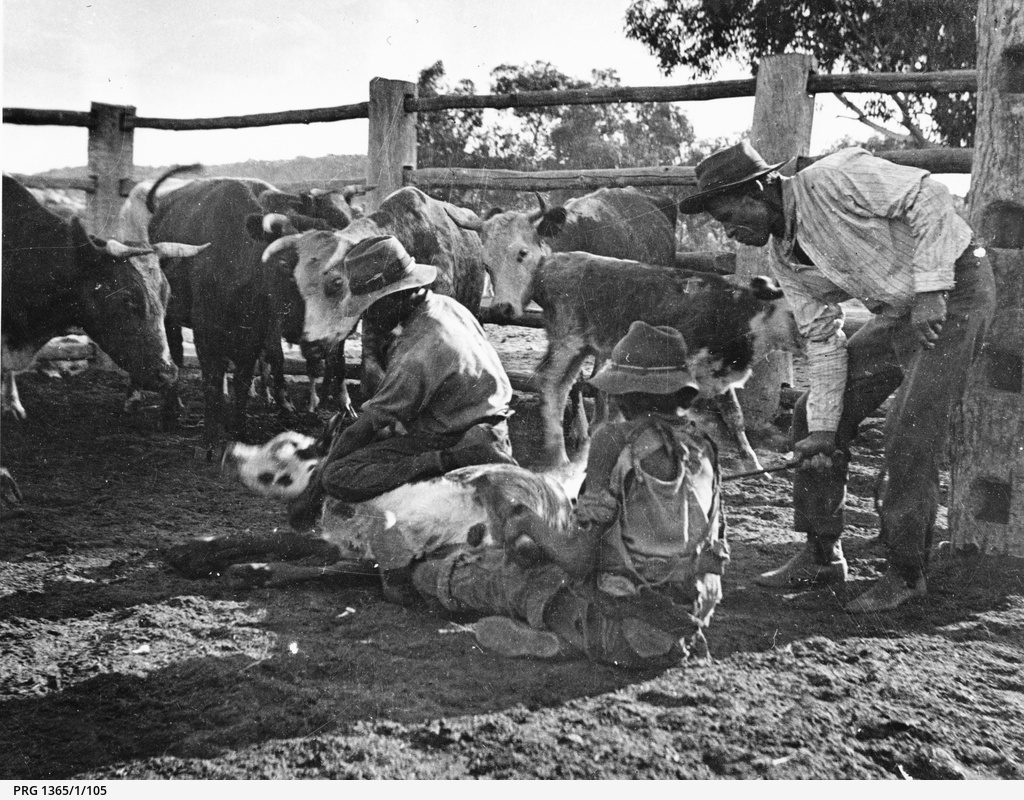 Branding government cattle