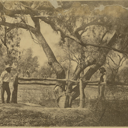 Robert O'Hara Burke's grave