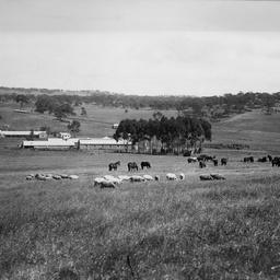 Shearing sheds at Bungaree