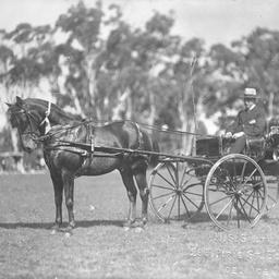 Prize winning horse drawn vehicles at O'Halloran Hill