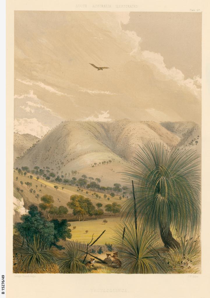 landscapes (views)