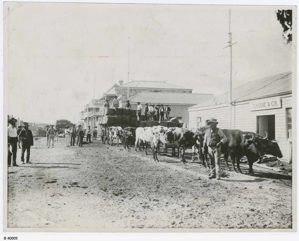 """""""Bullock team"""", Port Augusta"""