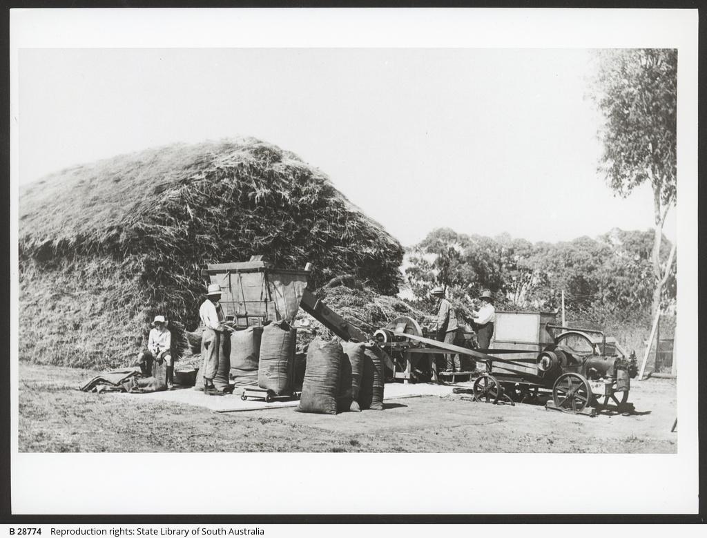 Chaff-cutting at Wattiparinga