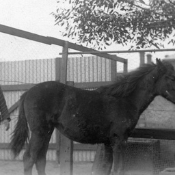 "A young man identified as H. G. B. Searcy and his pony ""Lady Bobs"""