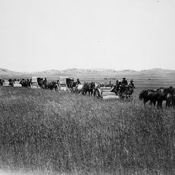 Horse drawn harvesters