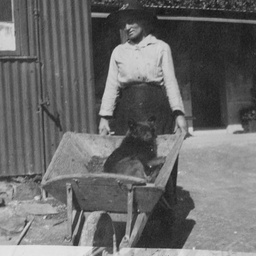 Woman with dog in a wheel barrow