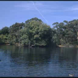 The lake in Wittunga Botanic Garden