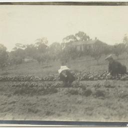 Weeding a garden bed of pansies on Wittunga farm