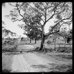 Views in South Australia : collection of black and white photograph negatives