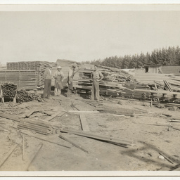 Views of pine plantation and saw mill