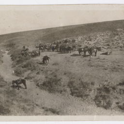 Horses resting after a fight.