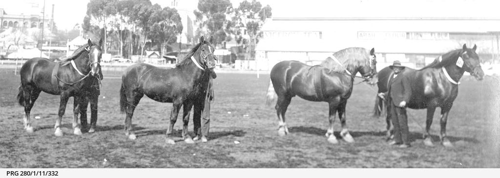 Prize winning horses at Jubilee Oval, Adelaide