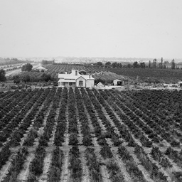 Orchards Renmark