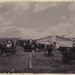Horse drawn vehicles at Renmark