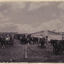 Horse drawn vehicles at Renmark