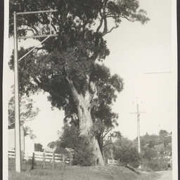 'Angaston, Town and Outskirts'