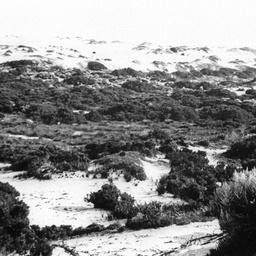 Sand dune and vegetation on Younghusband Peninsula