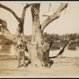 Burke Tree, Fort Wills