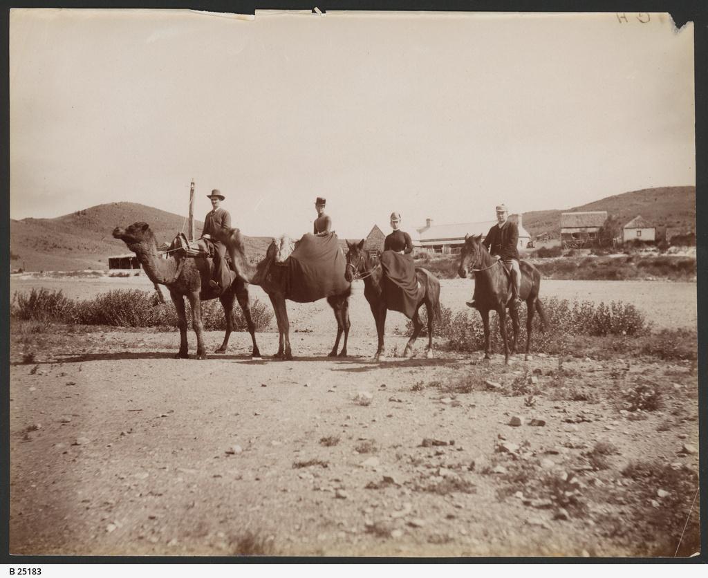 Camel Party at Peake