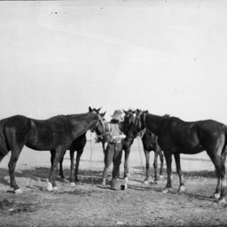 Man and horses.
