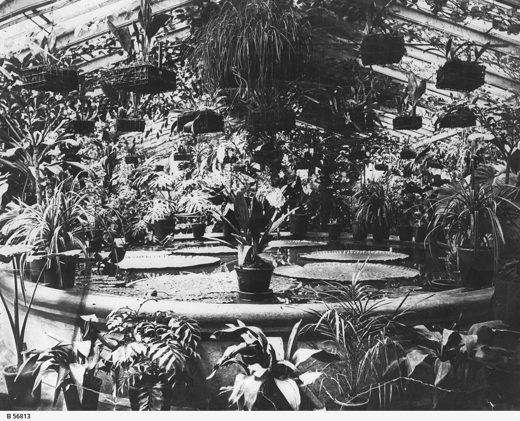 Interior of the palm house in the Botanic Gardens
