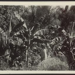 William White in his garden