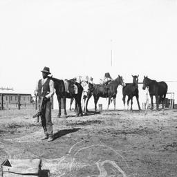 Aboriginal guide and packhorses