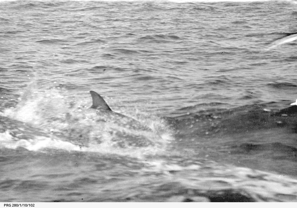 dolphins (mammals)
