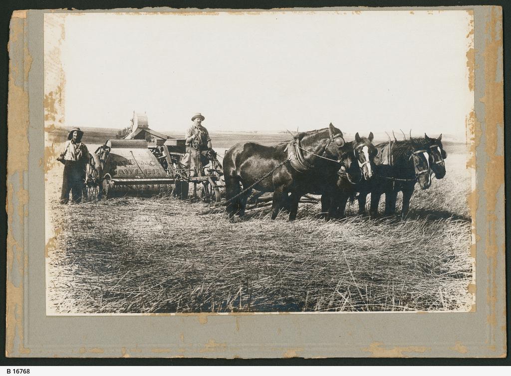 Farming, Koolunga