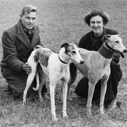 Man and woman with greyhounds