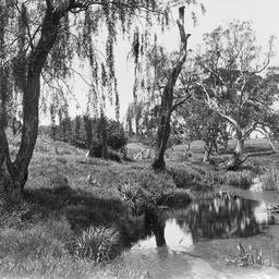Mount Barker Springs