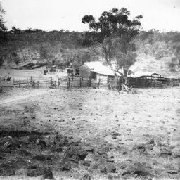 Bush homestead