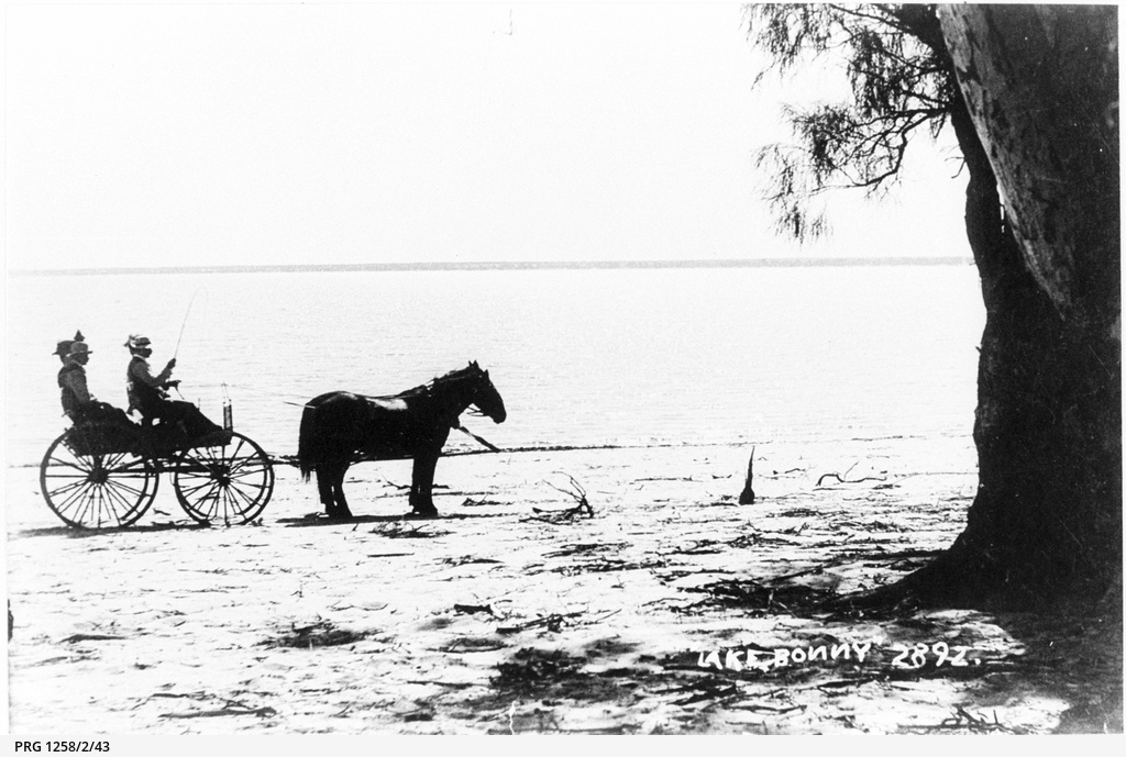 Horses and carriage at Lake Bonney in flood