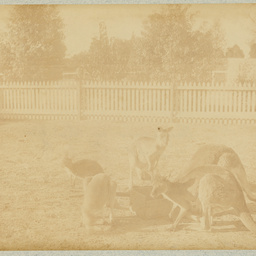 Album of photographs of early Adelaide