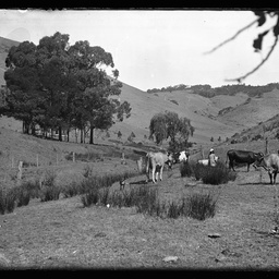 Collection of photographs taken around Adelaide by Theo Bachmann