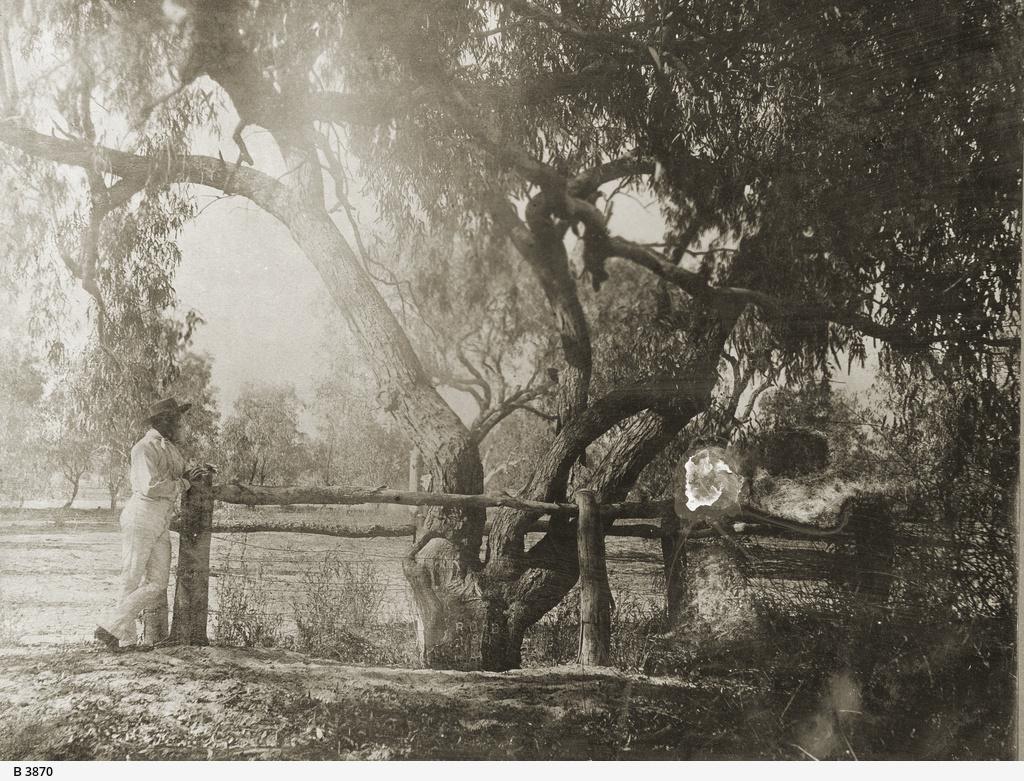 Burke's Tree